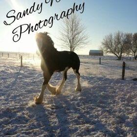 Sandy Welsh