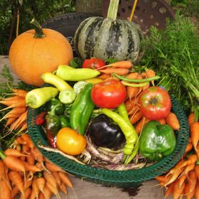 Bountiful Baskets Farm