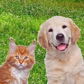 Arden Grange | naturally hypoallergenic dog & cat food