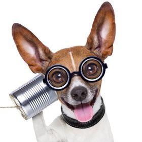 BarkThink - Pet Care/Dog Resource