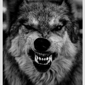"""Edwin """"lobo"""" Amaya"""