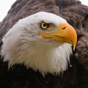 Smiling Eagle