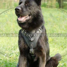German Shepherd Webstore