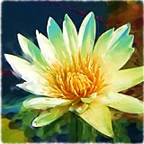 Golden Lotus Mala