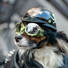 harley_davidson_biker_dog