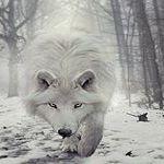John Wolfs