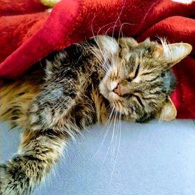 KočkaMazel