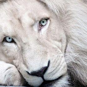 eleni lion