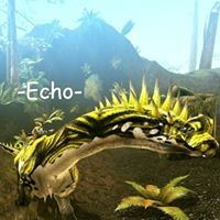Echo DS