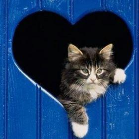 trublue =^.^= kittie