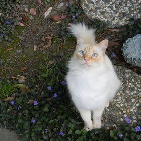 Melinda Meow