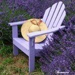 ~ LavenderDiva ~