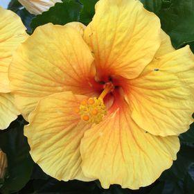 Rohsler's Allendale Nursery & Florist