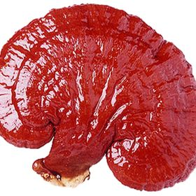 Ganoderma Products