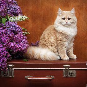 Castanheiro Cat Lodges