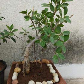 Jaydev Joshi