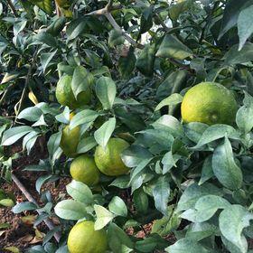 Marion.Lemonstory