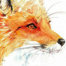 Red_Fox