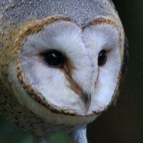 Owlisssa
