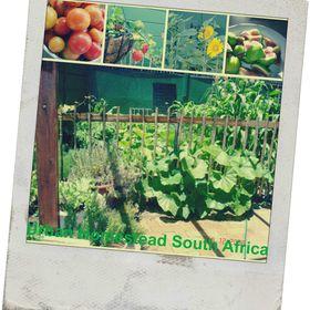 Urban Homestead SA