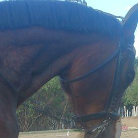 Appian Way Sport Horses