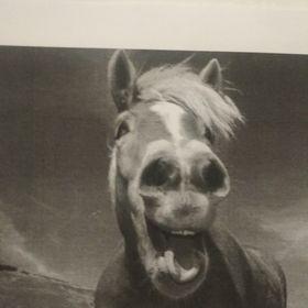 Tara Horse