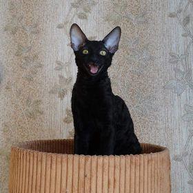 Kocica Lu