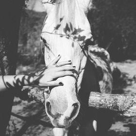 Lou cheval