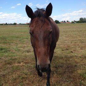A Horse Called Amulett