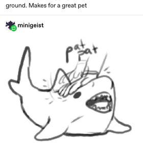 Lil Sharkie
