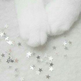meow >♡<
