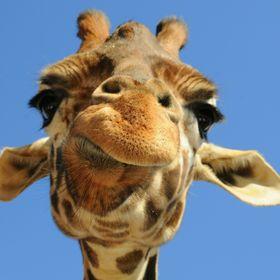 CheekyGiraffe