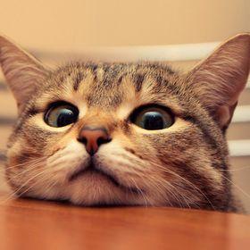 lovelycats11