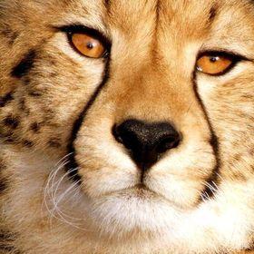 Tenikwa Wildlife Rehabilitation Center