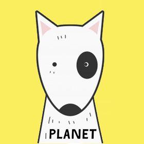 Bull Terrier Planet