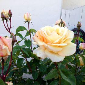 Mari-Rose