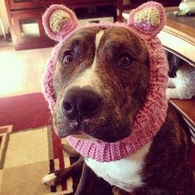 10+ Best Dog Sweater images | dog sweater, pet sweater, dog