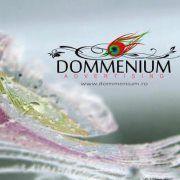 Dommenium Adv