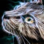 ELETRIC CAT