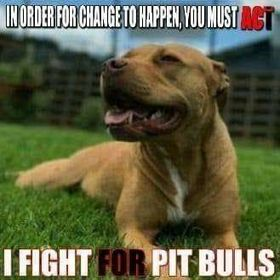 PITBULL'S DON'T JUDGE OR HATE