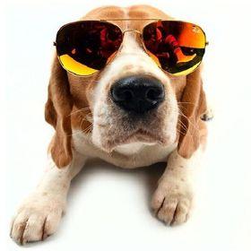 'Mr Dog'