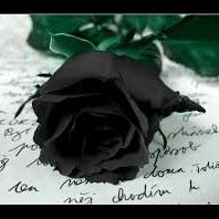Deadly Black Roses