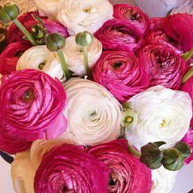 Planteglede Flowers