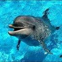 dolphin0621
