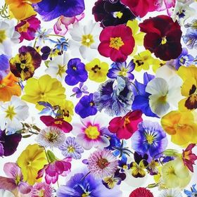 Edible Flowers - Maddocks Farm Organics