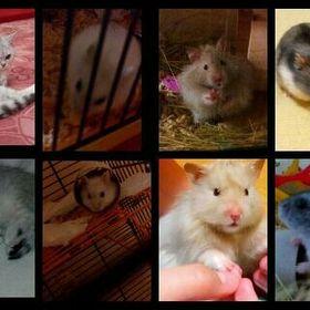 Love animals <3