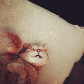 Jerseyhsinle Rockcat