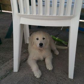 Kerry Dog Blog