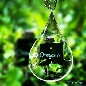 Best Oregano Oil