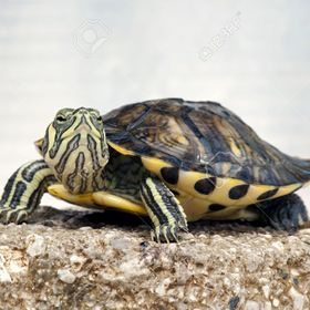 Ernest the turtle